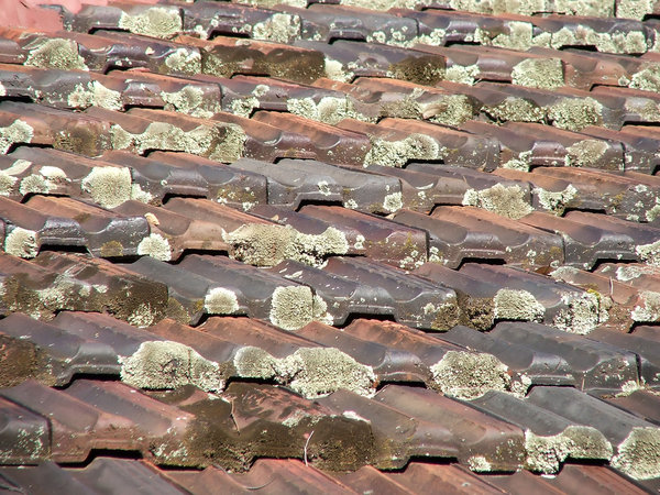 Roof Lichen