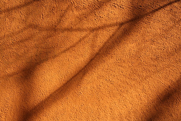 Branch shadow: Branch shadow in the wall