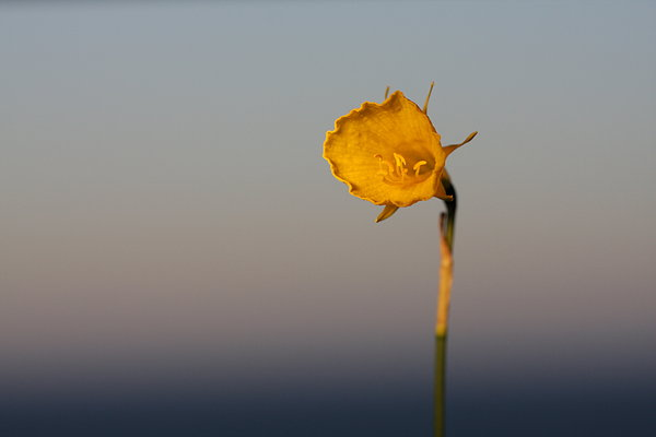 Lonely flower: Lonely flower
