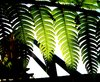 Rainforest Light