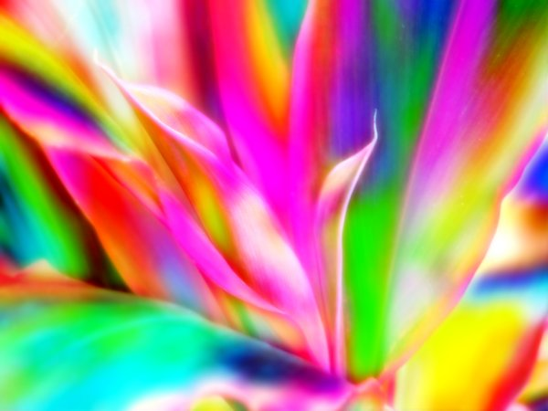 Rainbow Coloured Plant 1: This is a photo of plants, edited to have a rainbow effect. Makes a colourful desktop or background. A very cheerful and happy image.
