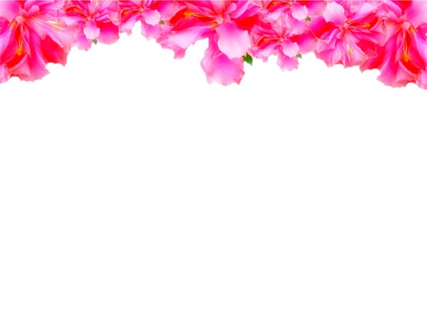Floral Border 4: Floral hibiscus border on blank page. Lots of copyspace. You may prefer:  http://www.rgbstock.com/photo/oy65Bp2/Painted+Fairy+Iris+Border+1  or:  http://www.rgbstock.com/photo/oaMoQN8/Old+Frame+1