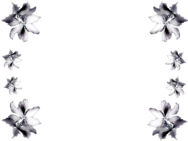 Black Flower Border
