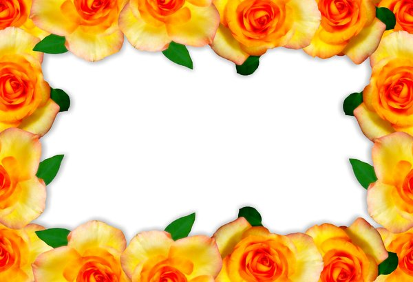 Floral Border  15: Floral border on blank page. Lots of copyspace.