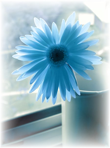Blue Flower: Duotone image of a flower in a vase.
