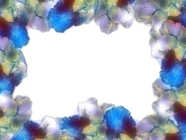 Floral Border: Floral border on blank page. Lots of copyspace. Made from a photo I took of cannas.