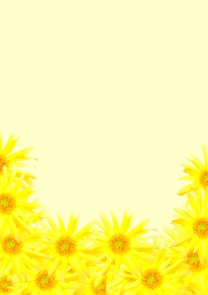 Floral Border 37: Pale border of small sunflowers on yellow background. Plenty of copyspace.