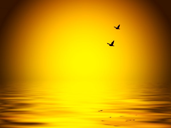 Birds over Water: Birds flying over a warm ocean at sunset.