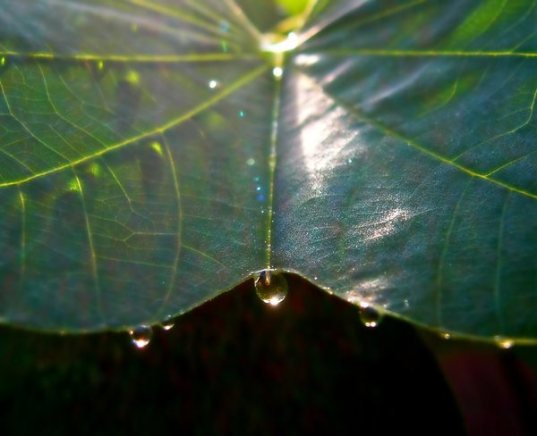 Light Through a Raindrop: Light glinting through a raindrop on a leaf, surrounded by refracted light, making rainbow colours. May be useful for ecology or nature illustrations. Abstract.