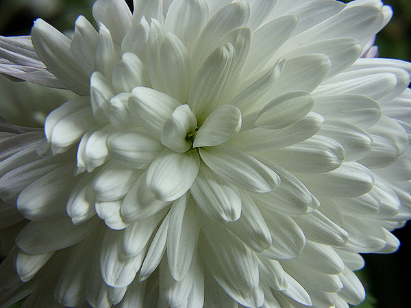 Free stock photos rgbstock free stock images white flower white flower mightylinksfo Image collections