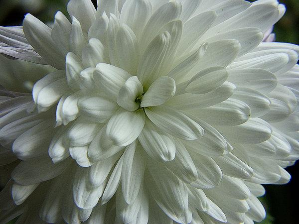 Free stock photos rgbstock free stock images white flower white flower mightylinksfo Choice Image