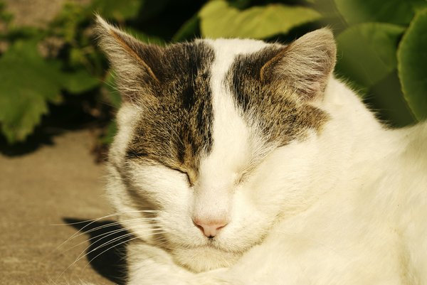 Snooze Time: My sleeping cat