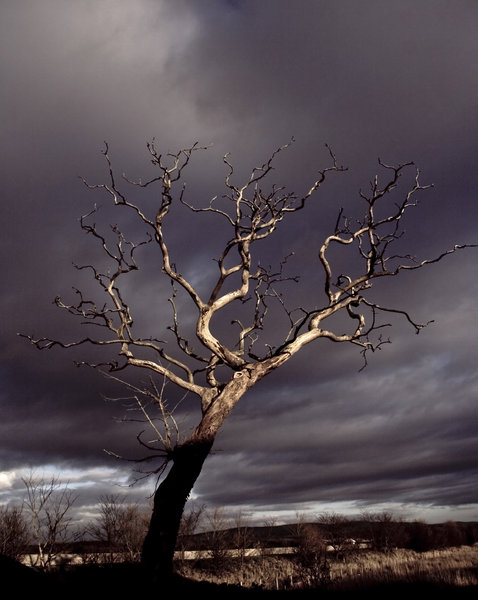 Dead Tree 2: Spooky dead tree against stormy sky, Glasson Dock, UK.