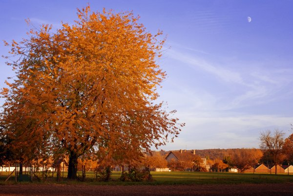 Autumn: A color ful tree.