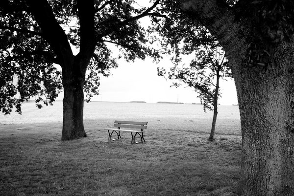 Bench and trees 2: A bench in the nature