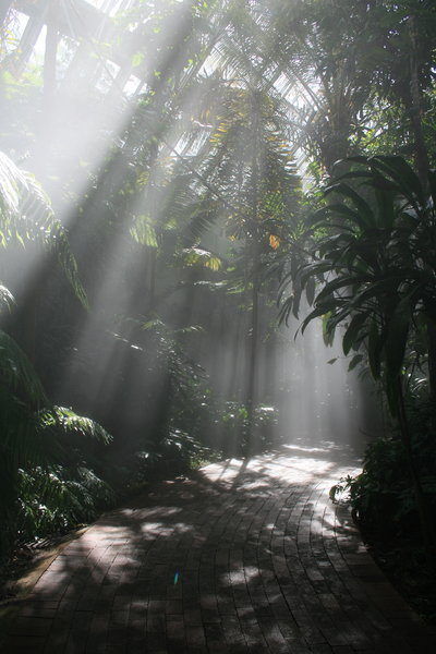 Mystical Path 2: Taken inside an artificial rainforest in the Adelaide Botanical Gardens (South Australia). The mist falling from above, with light streaming in created an environment with a truly mystical feeling to it!