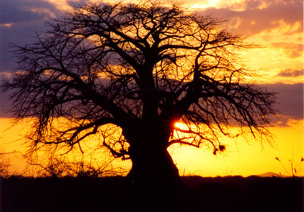africa sunset 1: sunset at Tsavo Nationa Park