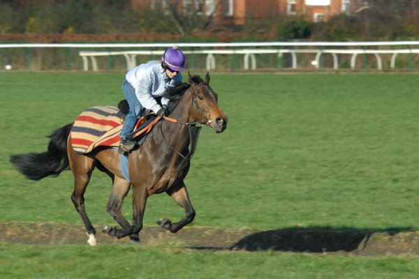 Racehorse 1: Racehorse galloping at Newmarket, England
