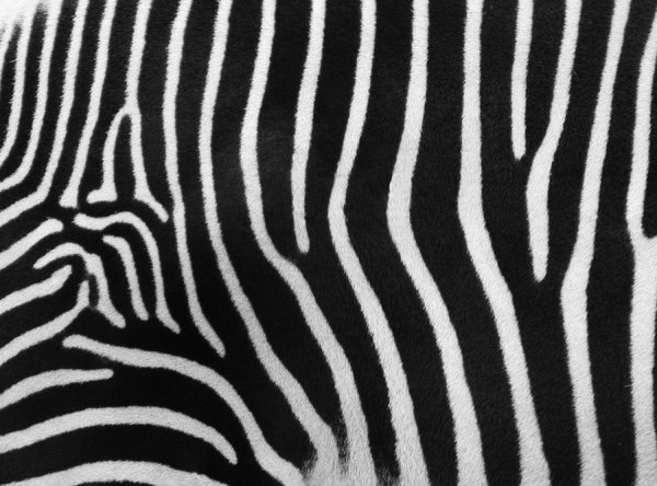 Zebra Stripes: Looking forward to feedback! Please credit if possible or drop me a line via http://www.jule.se