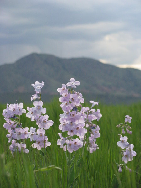 Springtime in the Rockies 2: We had an especially wet spring, which made for great wildflowers! It was taken in the suburbs of Denver along the foothills in an open space park.