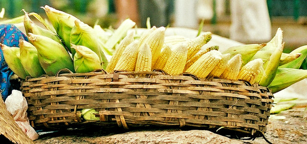 Corn basket: No description