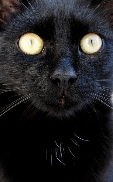 extreme closeup 2: cat closeup