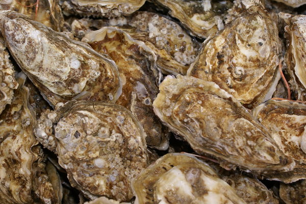 Oysters: French oysters