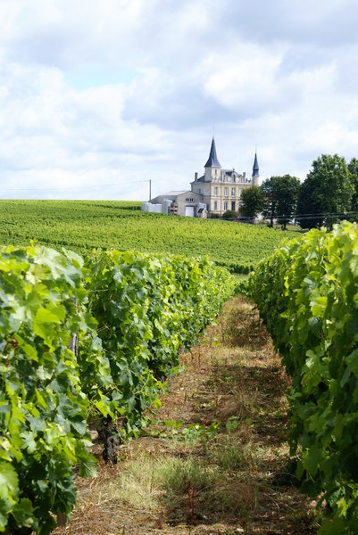 Vineyard in Bordeaux: Vineyard in Bordeaux