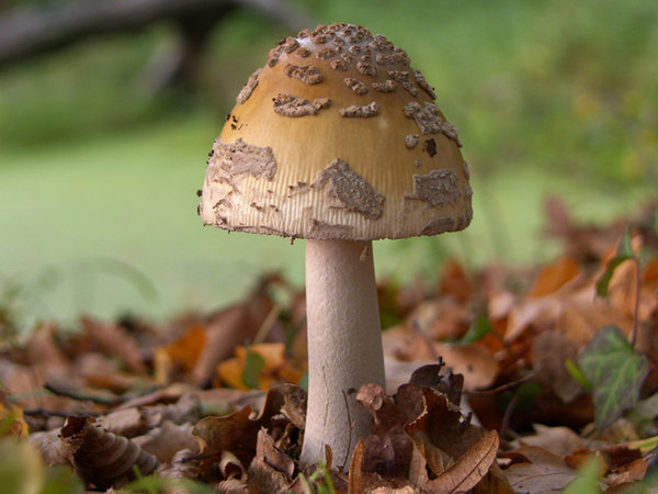 Crazy mushroom: More photos like this one on:http://www.lonjsko-polje. ..Nature park Lonjsko polje Croatia