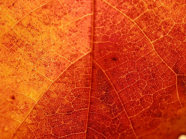 Leaf up close: Leaf up close