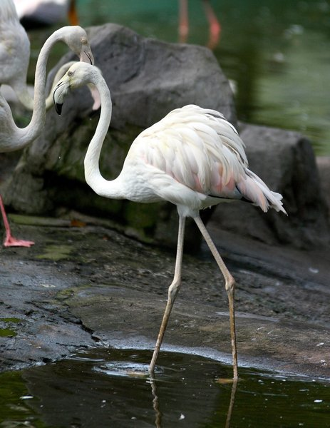 Pretty Bird 1: Snapshot of a flamingo at the bird park