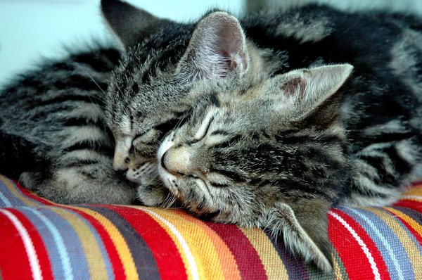 Peaceful Sleep: Two kittens sleepingNB: Credit to read