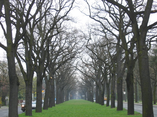 tree alley: tree alley