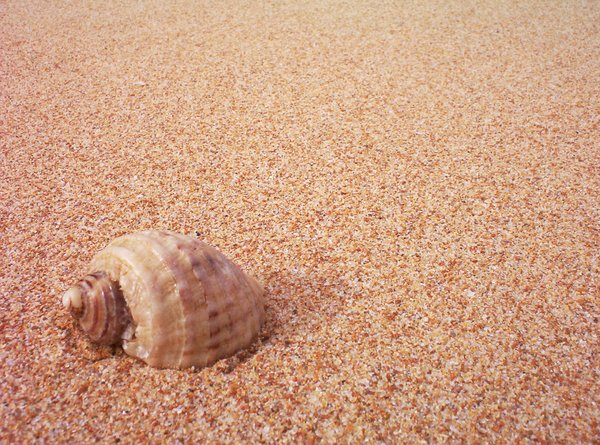 Sand and Shell: Shell on a sandy beach (Australia)