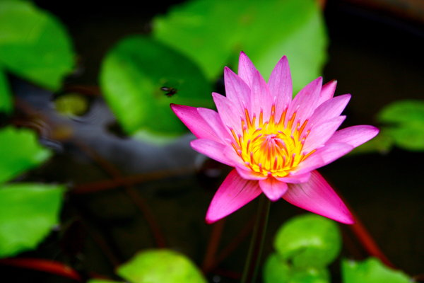 Waterlily 8: Waterlily