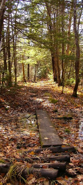 Ancient Pathway: Old forgotten pathway along a river in White Rock, Nova Scotia, Canada