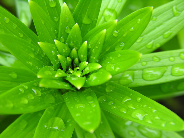 Spring rain - young plant: My one