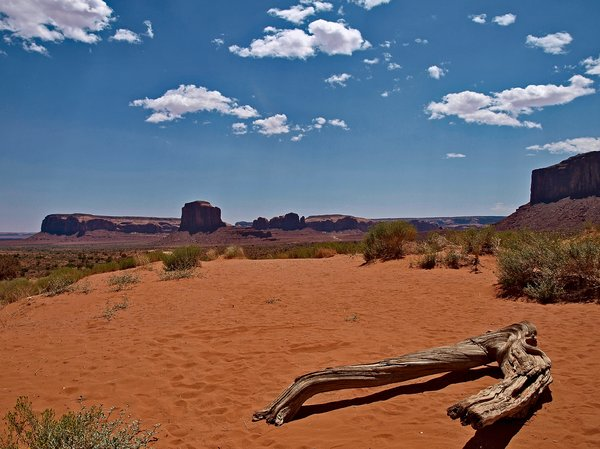 Monument Valley: A tree trunk in Monument Valley