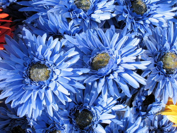 Free stock photos rgbstock free stock images blue silk flowers blue silk flowers mightylinksfo