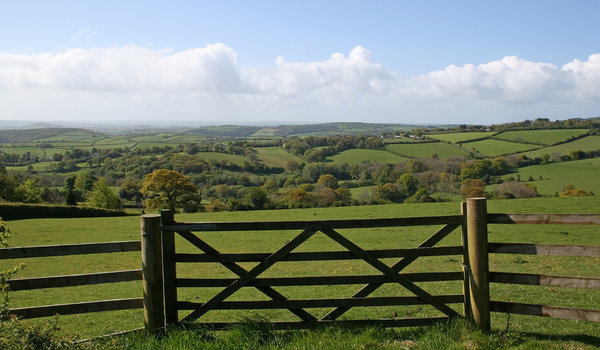 Devon gate: Gated field landscape of Devon, England, in summer.