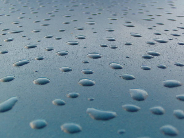 water drops 2: morning photo