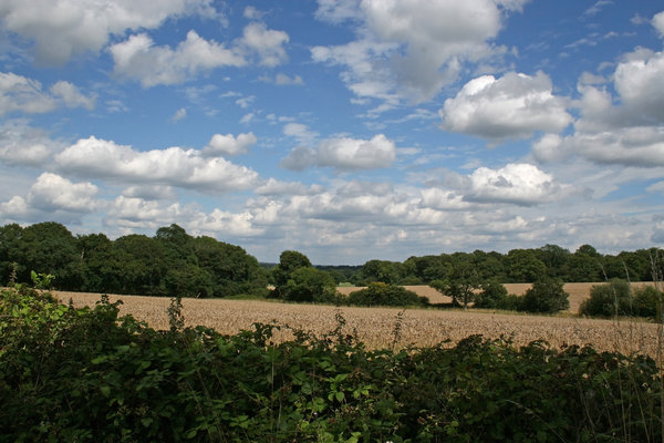Sussex countryside: Fields, hedges and woodland typical of West Sussex, England, in summer.