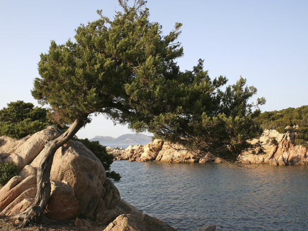 Nostalgia: An old gnarled tree among granitic boulders on the coast of northeast Sardinia.