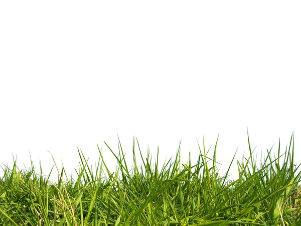 green grass: green grass background