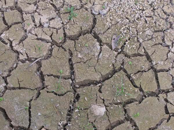 dry and cracking: dried lake bed - soil - in drought conditions - small freshwater molluscs died in dry conditions