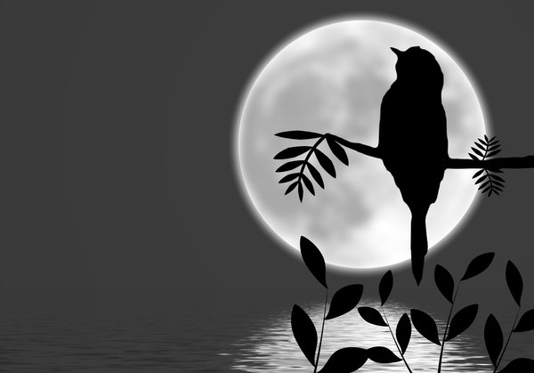 Bird Silhouette on Branch 2: A bird sitting on a branch silhouetted against the bright moon, with the moonlight reflected in water..