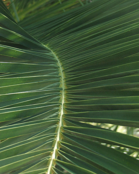 palm leaves: palm leaves