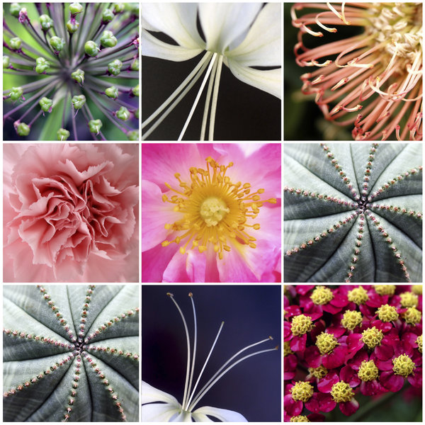 Flower collage: flower collage