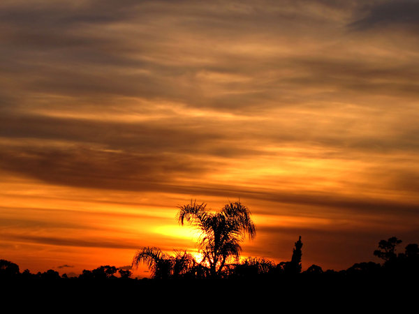 sunset skies: soft cloud formations and tree silhouettes at sunset