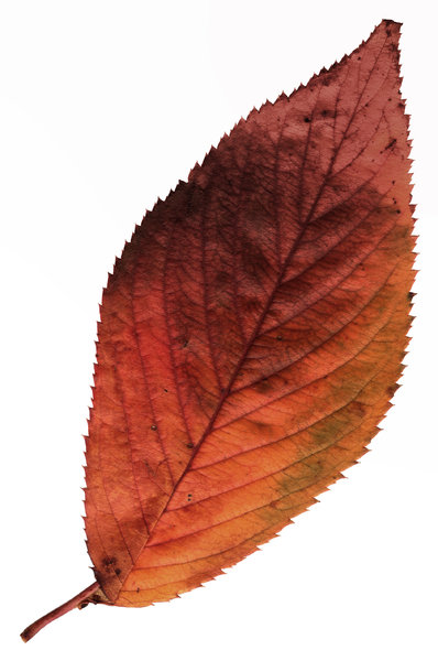 Leaf 10: A series of isolated leaves.